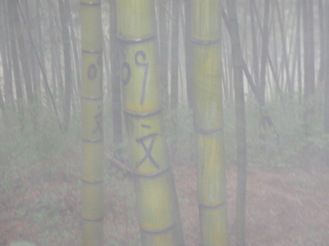Marking the bamboo trees.