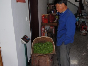 I was watching this guy weighing his tea leaves in a small village in China, just waiting for the ash to fall into the tea leaves. How not to do a small thing.